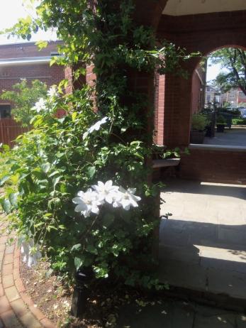 https://bbreplica.files.wordpress.com/2016/05/white-flora-vines-orange-street-church-cloister-gazebo-iin-cemetary-gates.jpg